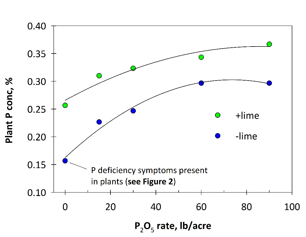 Figure 3. Grain tissue P concentration with lime and different rates of seed-placed P