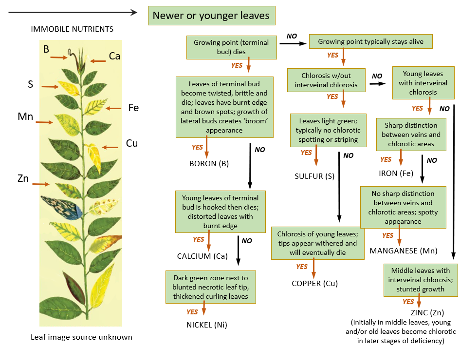Immobile Nutrients In Plant B Cu Ca Fe Mn S Zn