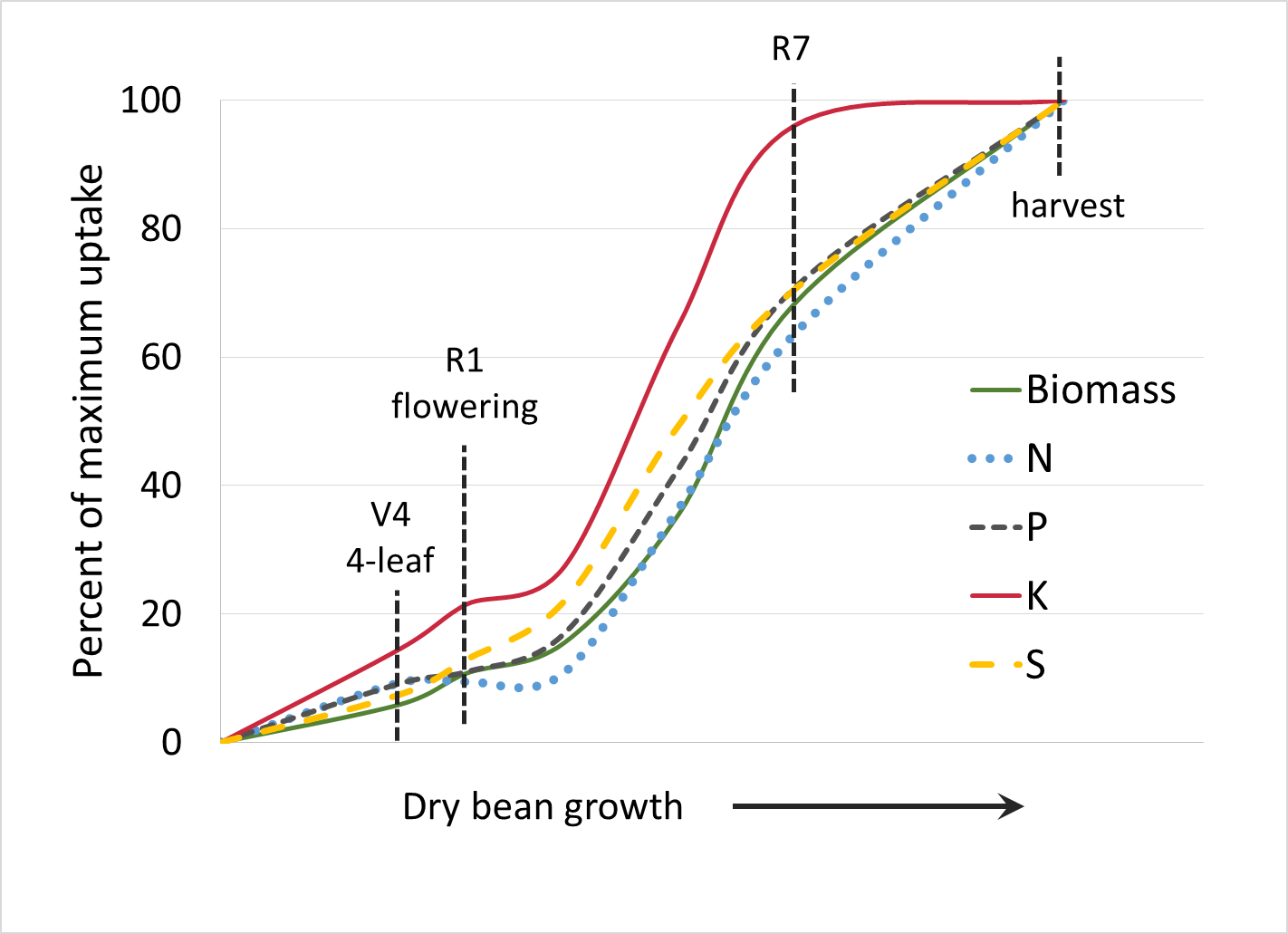 dry bean nutrient uptake