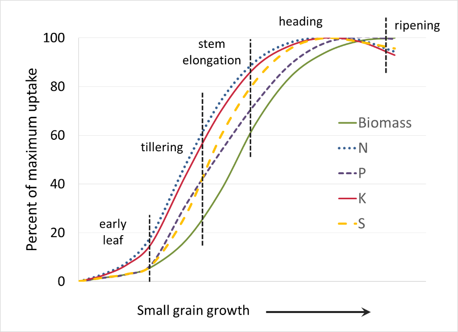 small grain nutrient uptake