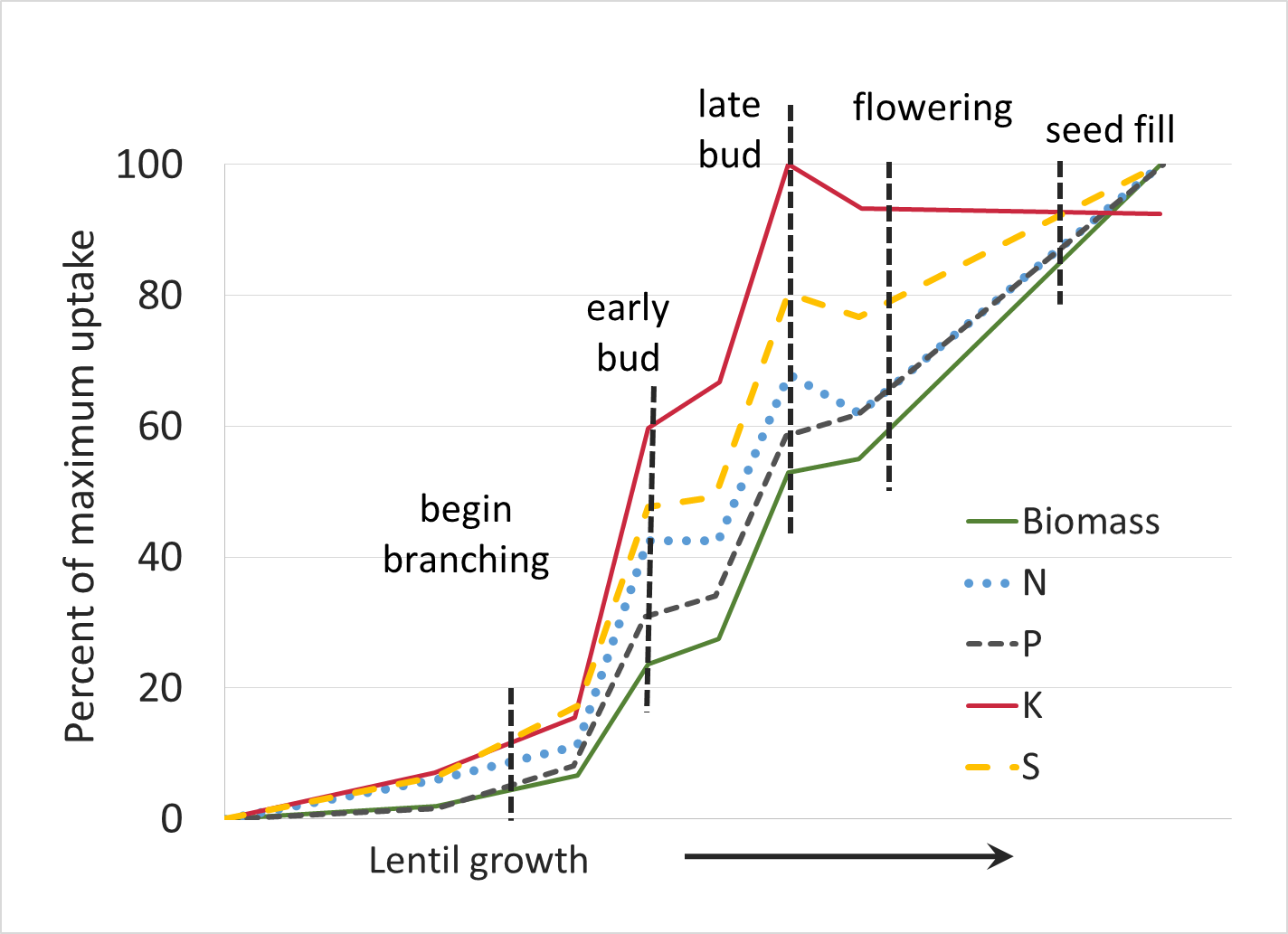 lentil nutrient uptake