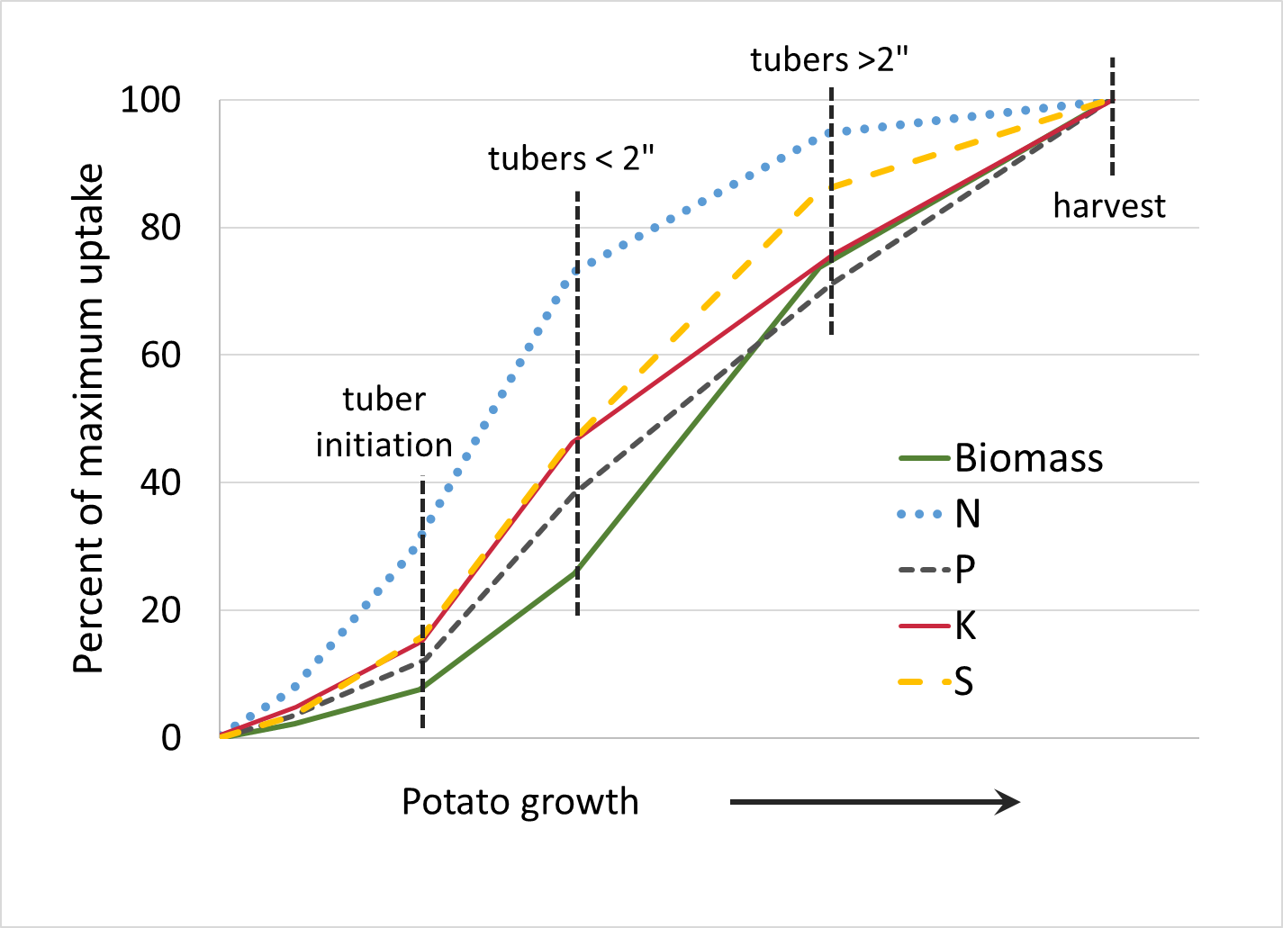 potato nut uptake