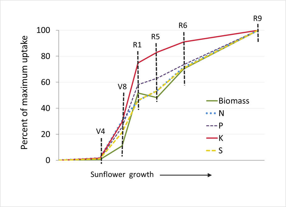 sunflower nut uptake